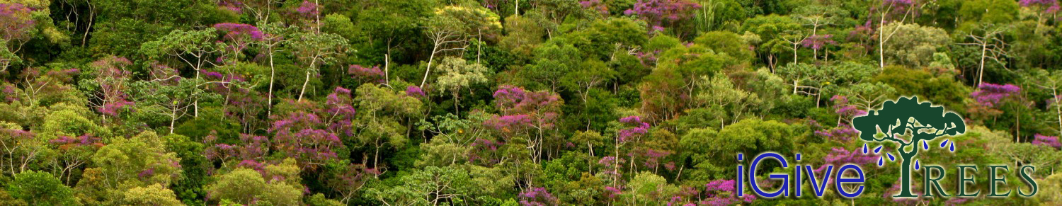 Rainforest ECO ~ iGive TREES blog