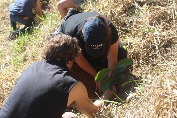 Harvard is Planting at SINAL