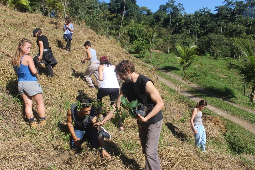 Planting SINAL hillside
