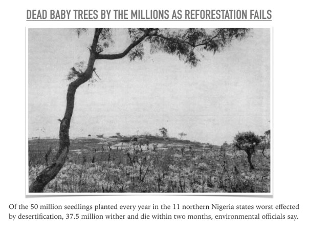 Nigerian tree seedling.001